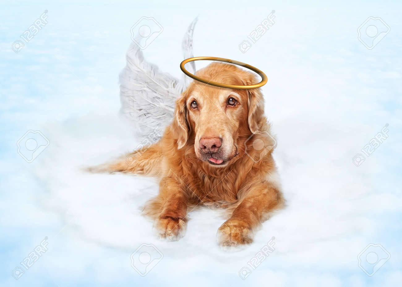 Old Dog Wearing Angel Wings And Golden Halo Laying On Clouds In Heaven Stock Photo