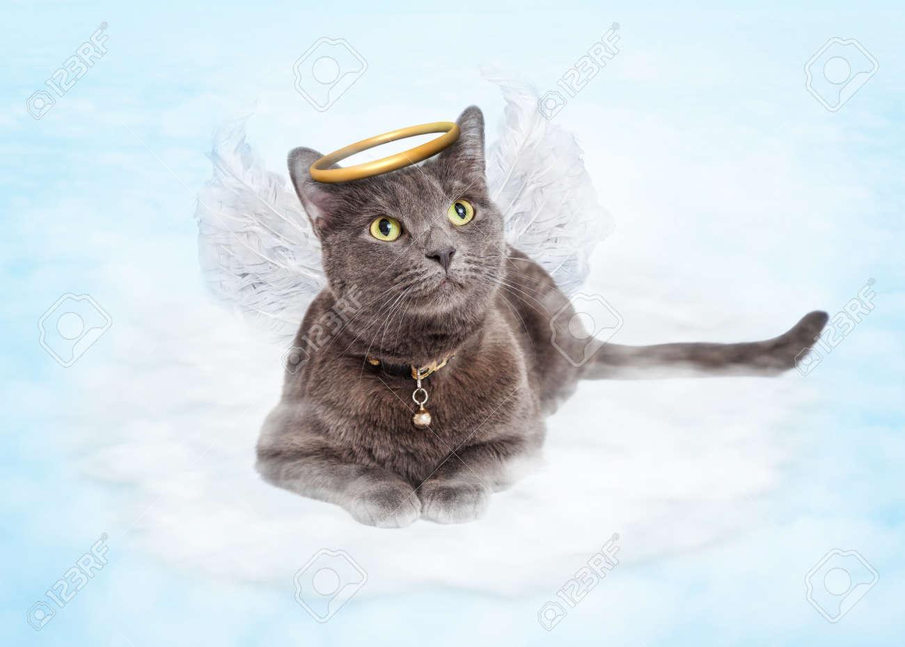 Resultado de imagen para imagen de gato con aureola