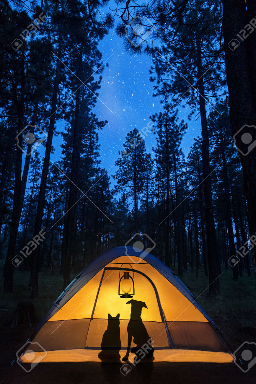 Silhouette Of A Cat And Dog In Camping Tent Under The Stars Woods