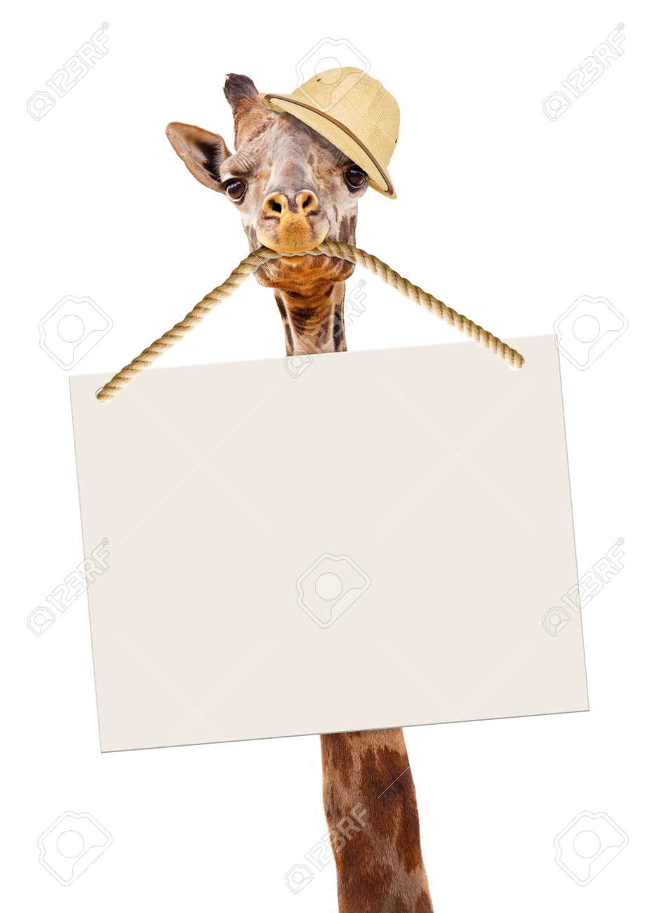 9c469194186 Funny image of giraffe wearing safari guide hat and carrying a blank sign  in his mouth