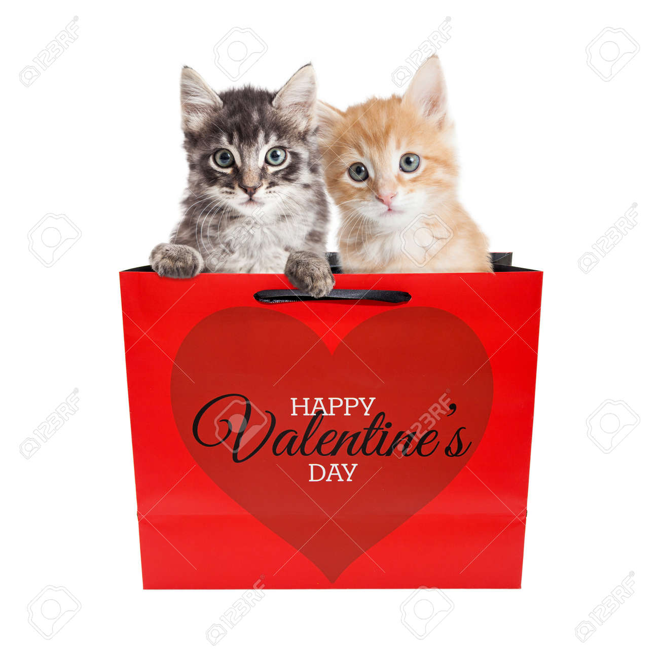 Two Cute Kittens In A Valentine S Day Gift Bag Isolated On White