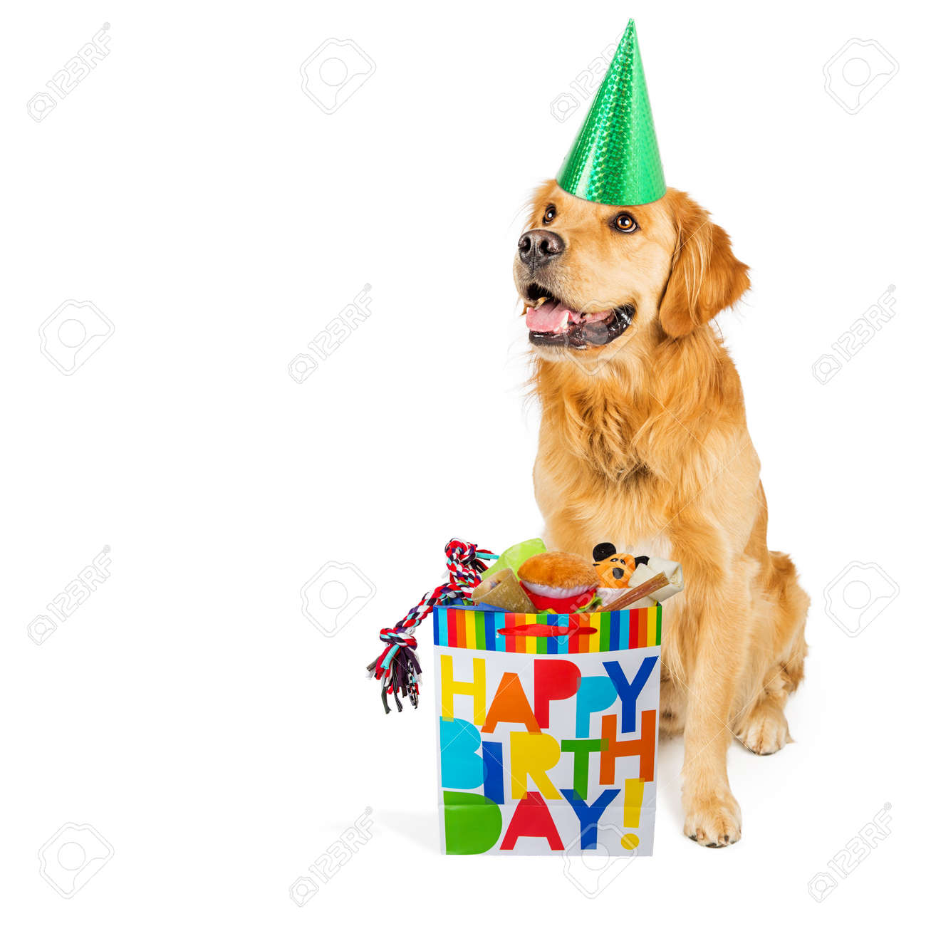 Happy Golden Retriever Dog Wearing A Party Hat With A Birthday