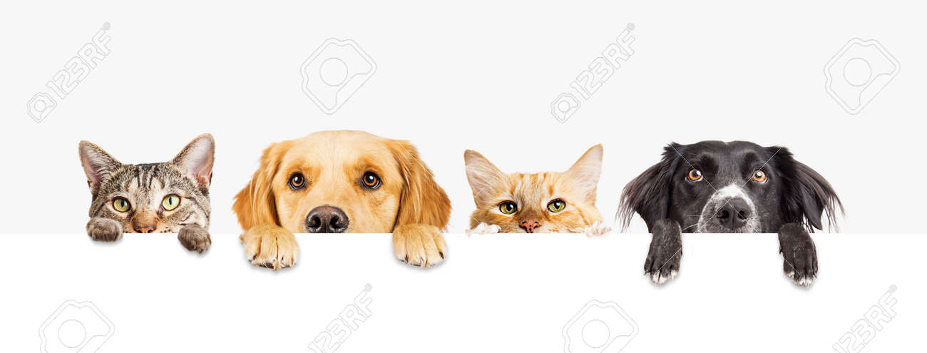 Row of the tops of heads of cats and dogs with paws up, peeking over a blank white sign. Sized for web banner or social media cover - 99224333