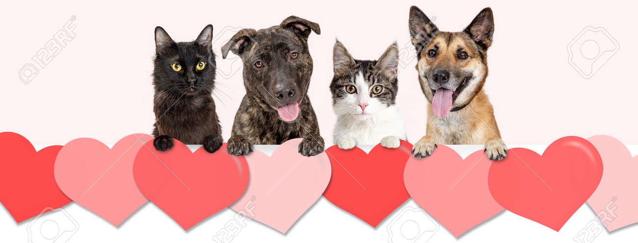 Dogs And Cats Hanging Over Row Of Valentine S Day Hearts Website Stock Photo Picture And Royalty Free Image Image 118384955