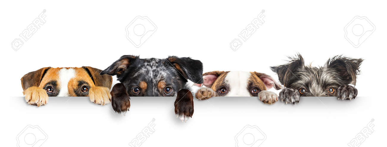 Funny dogs peeking eyes above white horizontal web banner with paws hanging over - 137260401