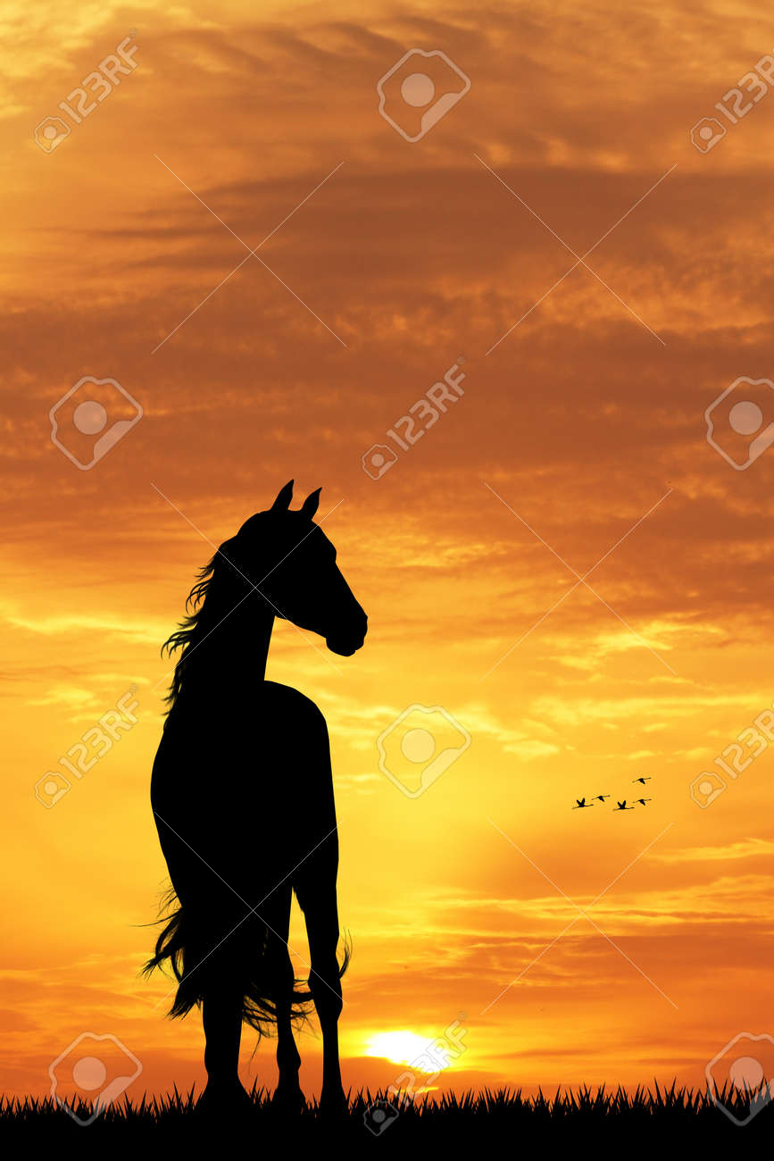 Horse Silhouette At Sunset Stock Photo Picture And Royalty Free Image Image 49518204