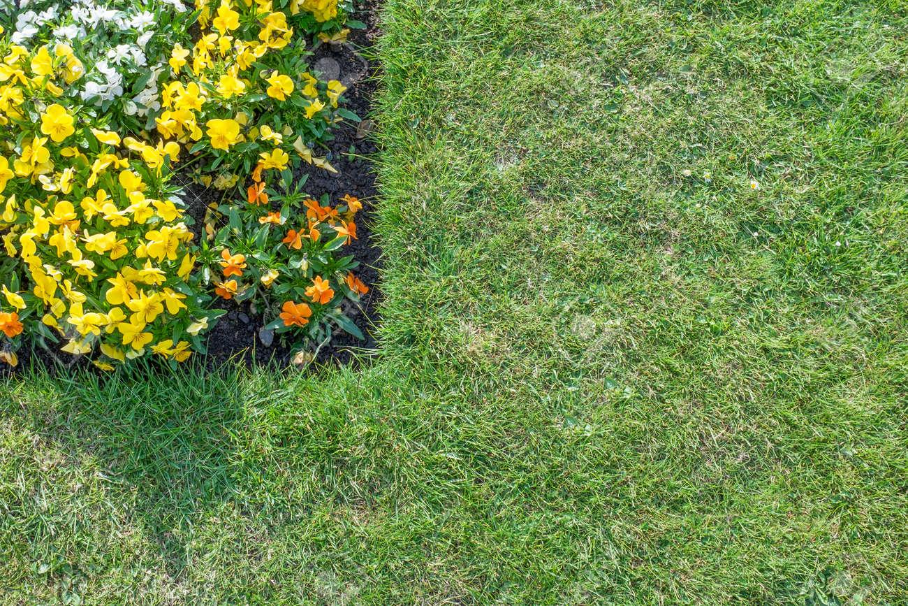 Corner Von Blumenbeet Mit Orange Gelb Weißen Blumen Umgeben Von ...