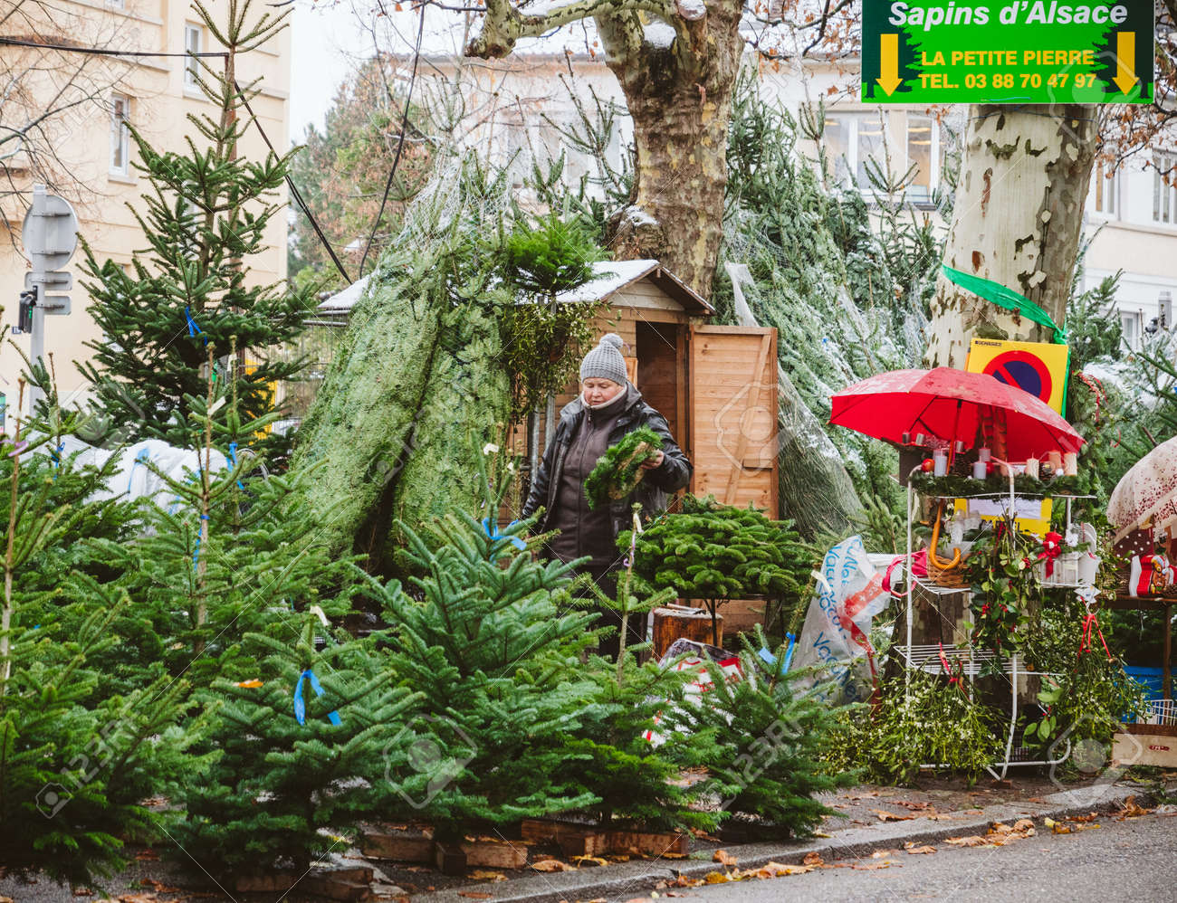 Christmas Trees For Sale.Strasbourg France Dec 4 2017 Christmas Tree Sale At The