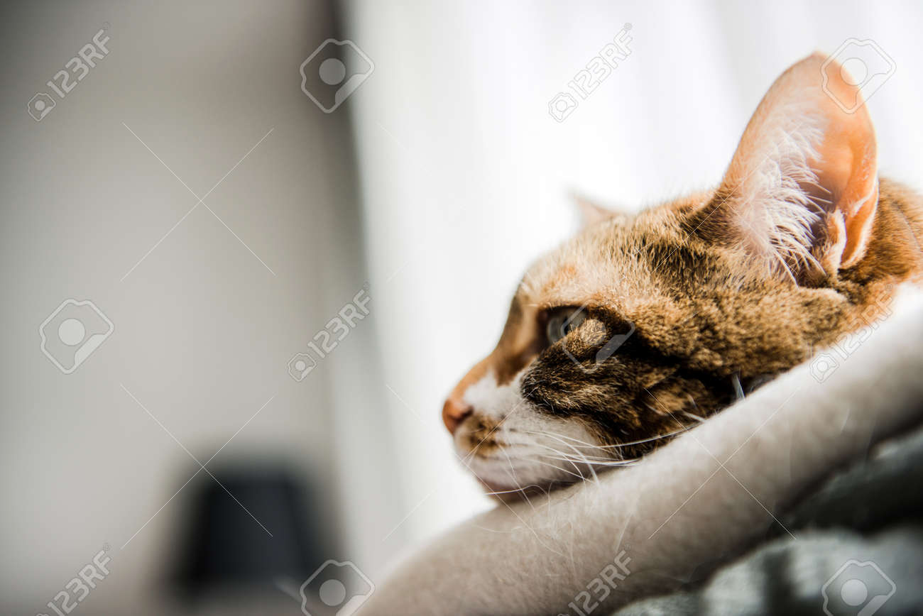 Profile View Of Cute Cat With Funny Face Pensive Melancholy Stock Photo Picture And Royalty Free Image Image 95835316