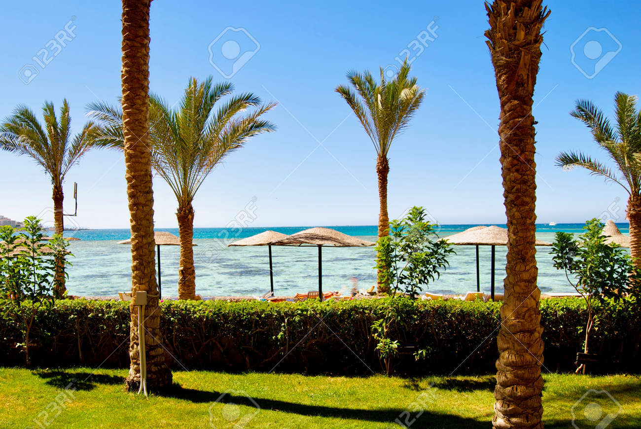 Holiday In Africa Beach In Egypt Near To Hotel Rooms Palms Stock Photo Picture And Royalty Free Image Image 80218664