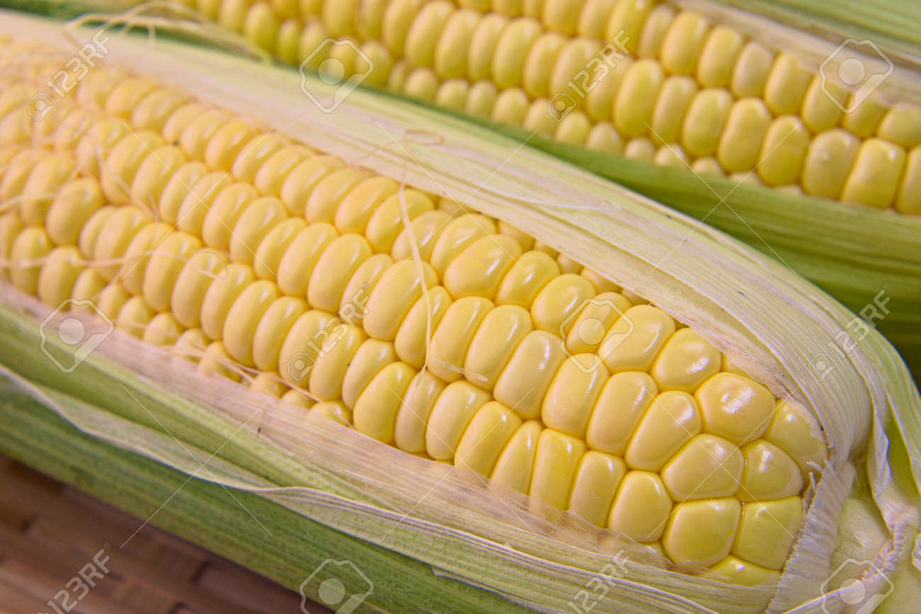 Closeup photo of Corn from Hokkaido - 109977873