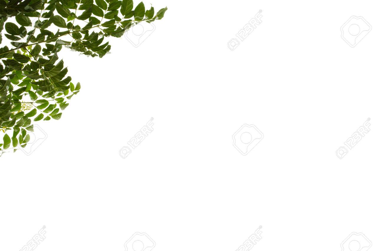 Natürlichen Grünen Blatt Auf Weißem Hintergrund, Rahmen Blätter ...