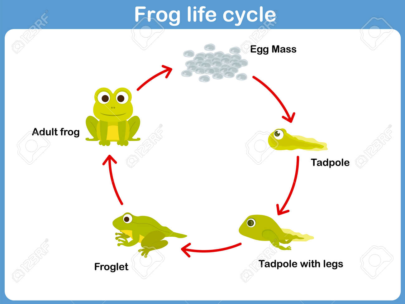 3952 water cycle stock vector illustration and royalty free water vector life cycle of a frog for kids pooptronica Images