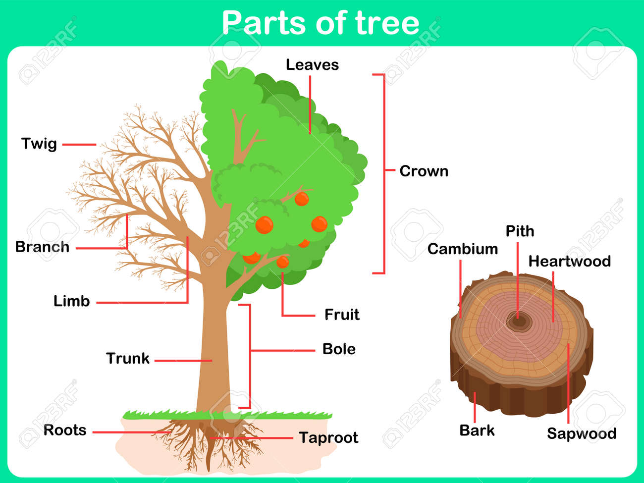 Leaning Parts Of Tree For Kids - Worksheet Royalty Free Cliparts ...