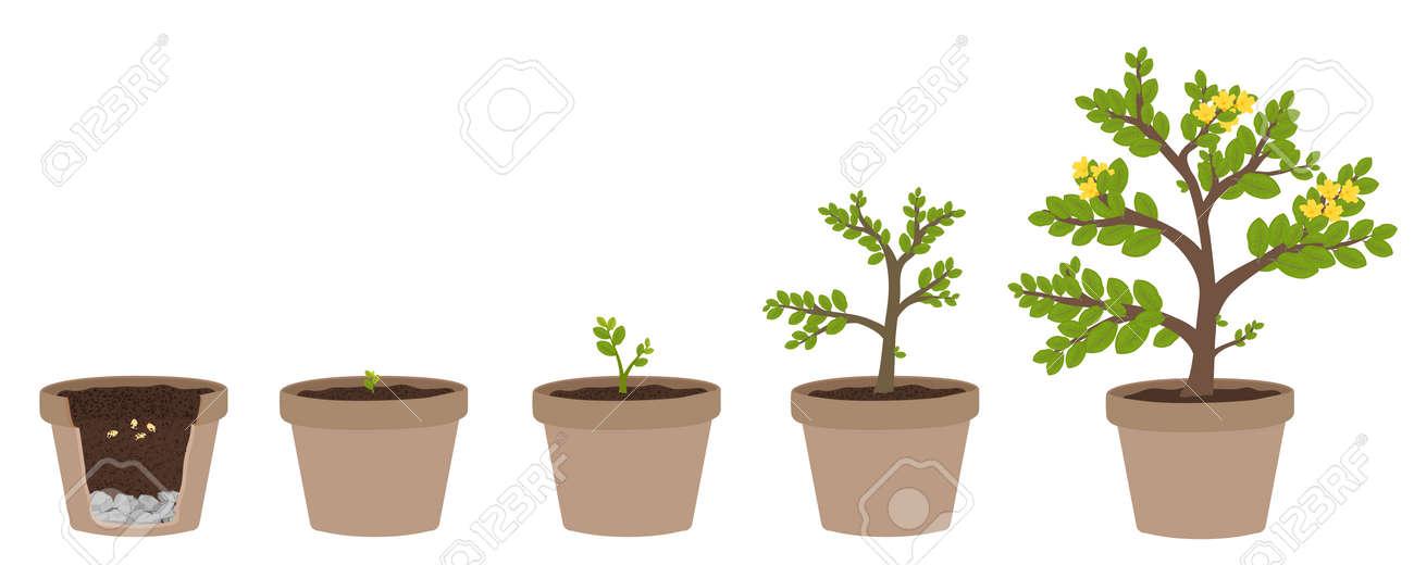 Wie Pflanzen Wachsen. Einfach Schritt Für Schritt Für Kinder ...