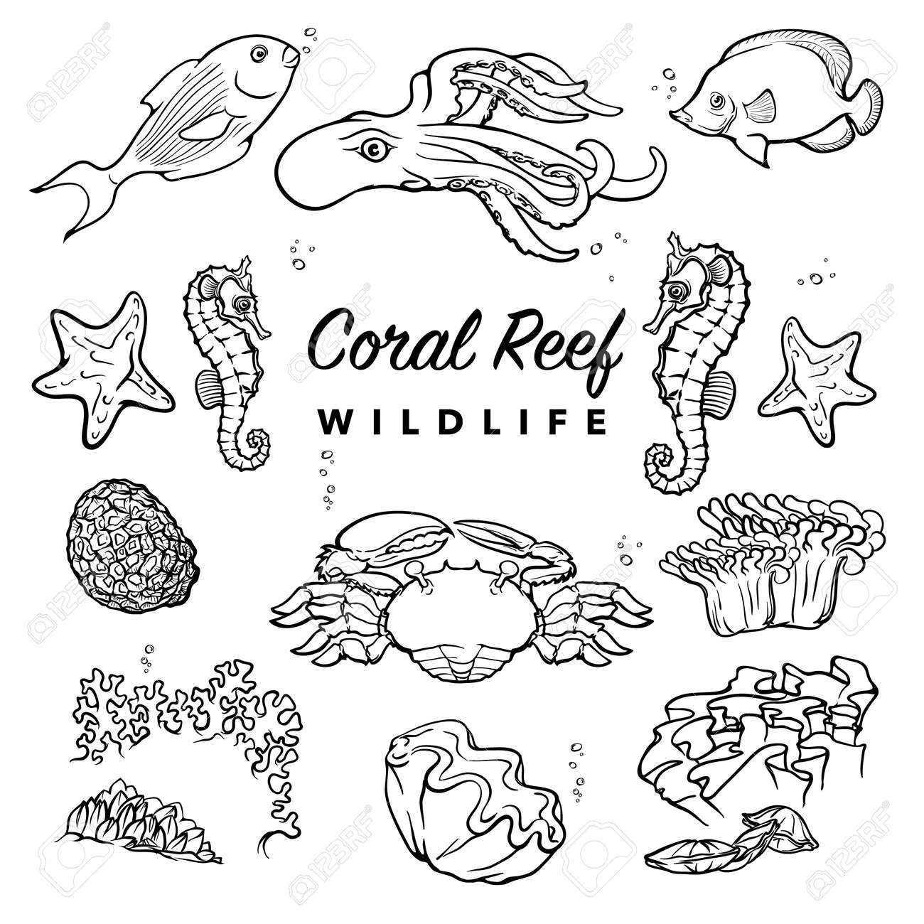 Tropical Coral Reef Inhabitants. Sea Creatures Drawings With White  Silhouettes Isolated On White Background.