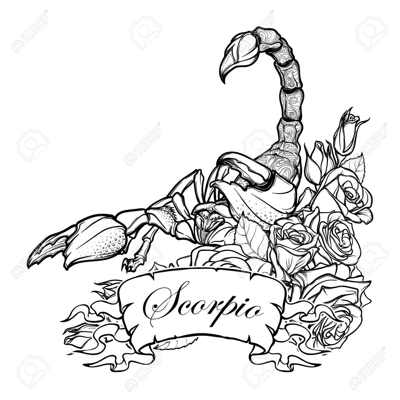 Signo Zodiacal Escorpio Escorpión Realista Detallada En Un Marco Decorativo De Rosas Boceto Aislado En El Fondo Blanco Arte Conceptual Para El