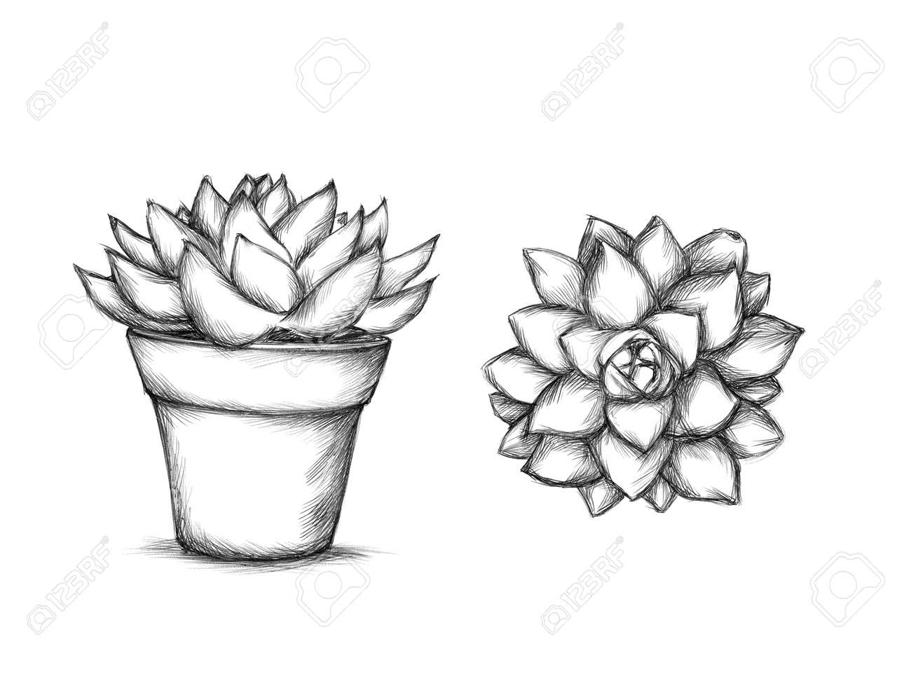 植木鉢に多肉植物のイラスト の写真素材画像素材 Image 77347870