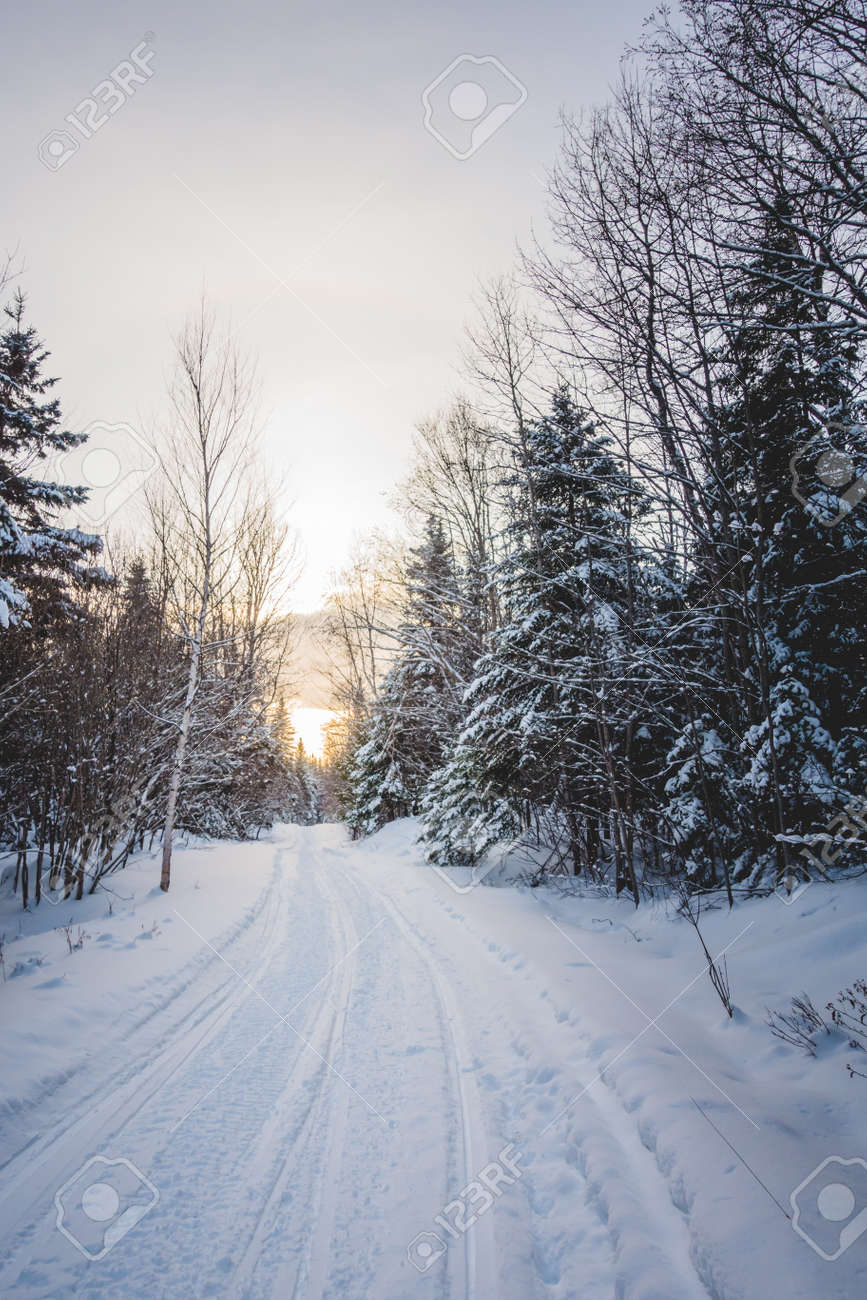 Snowmobile Tracks in Wild Forest of Cold Winter Sunset in Quebec,