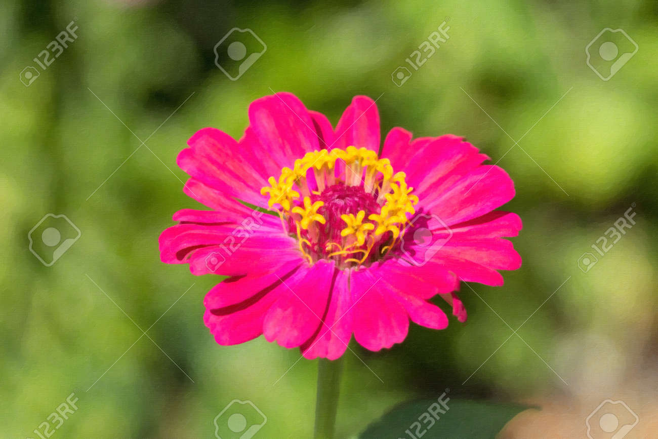 Color Purpura En Pintura. Flores De Color Prpura Gratis Png Y ...