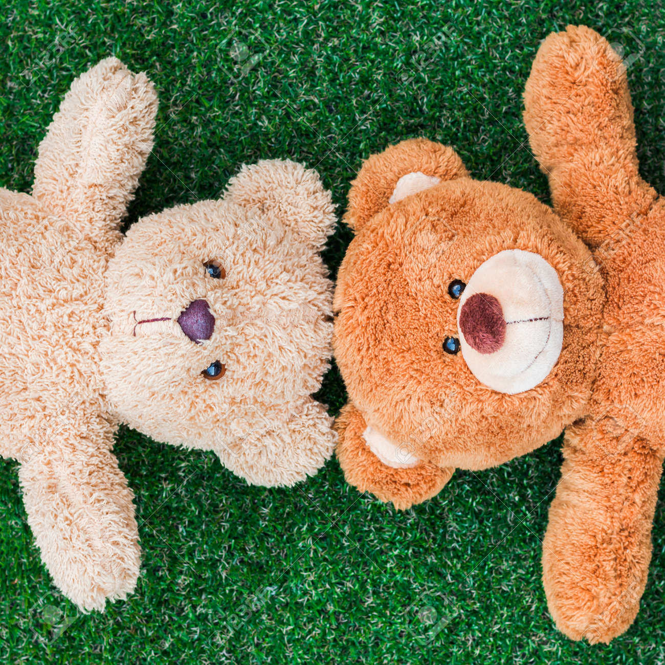 cute teddy bears on green grass background stock photo picture and