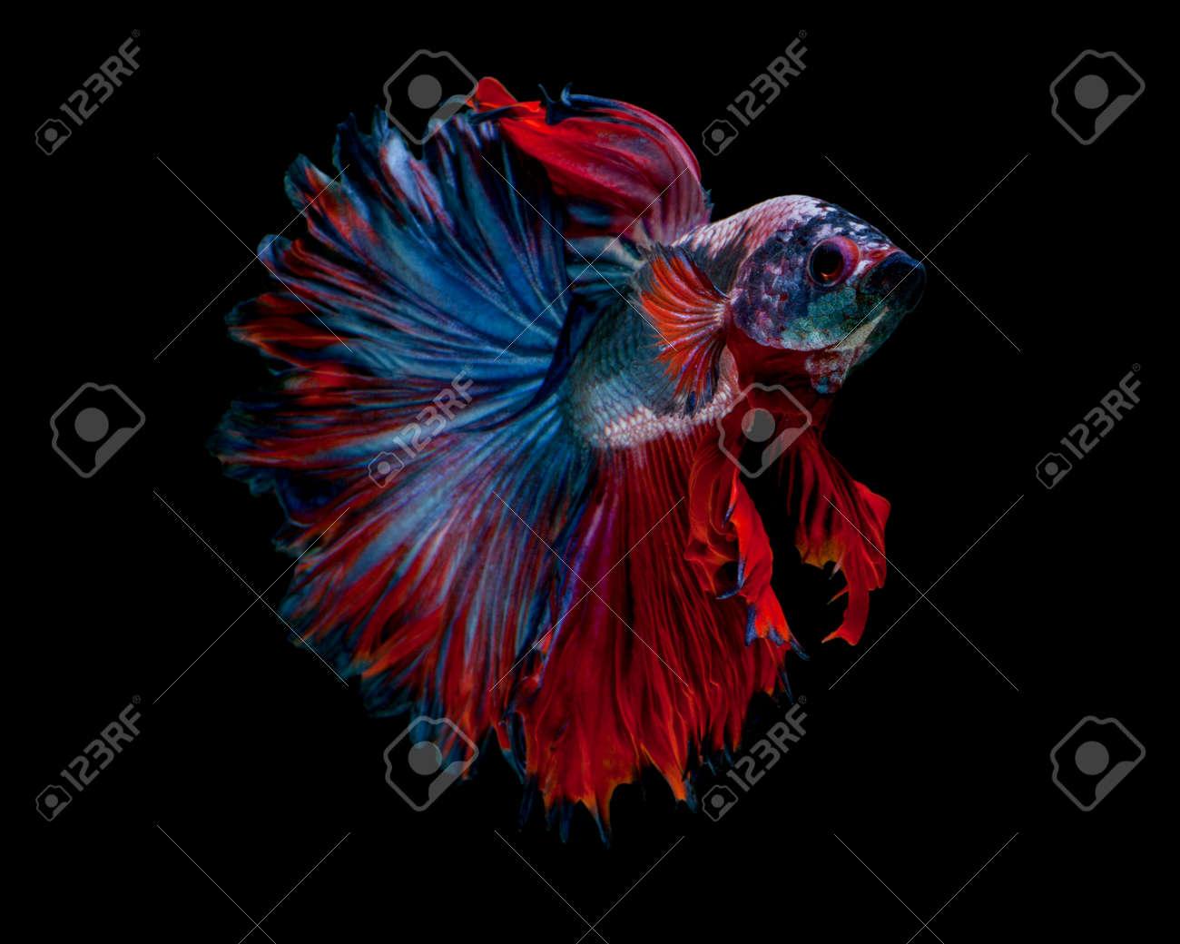Power Color Betta Fish \