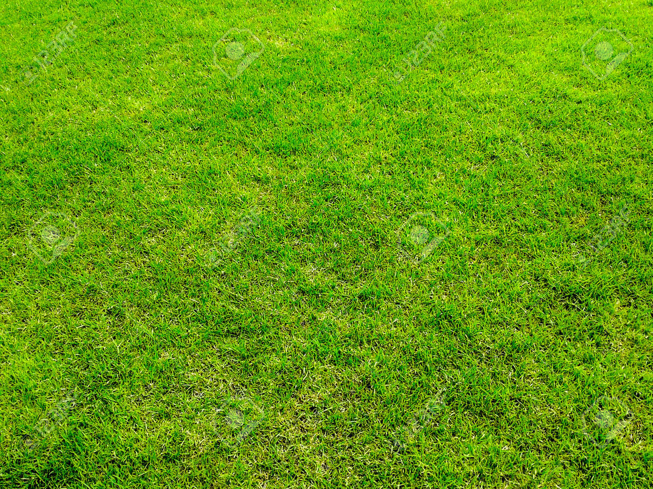 green grass surface ground Stock Photo - 21576444
