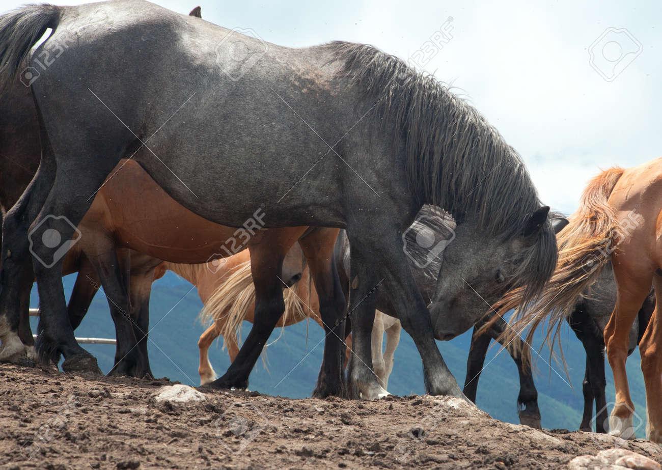 山 Kumysnoy の農場で馬の群れ。...
