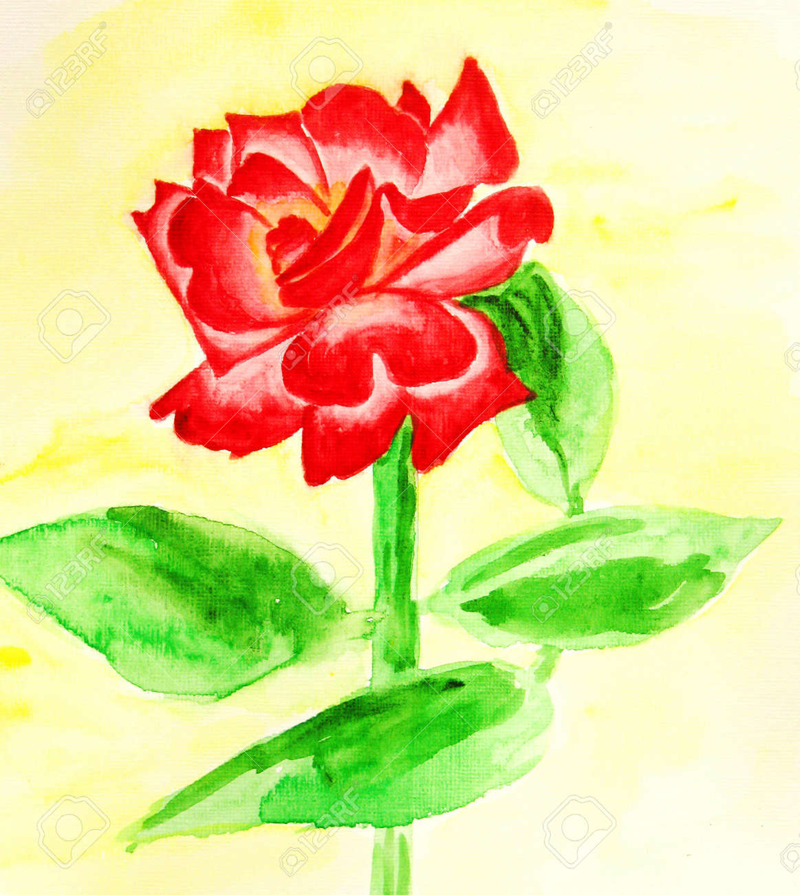 Hand drawn picture, watercolour - red rose on light yellow background. Stock Photo - 11512172
