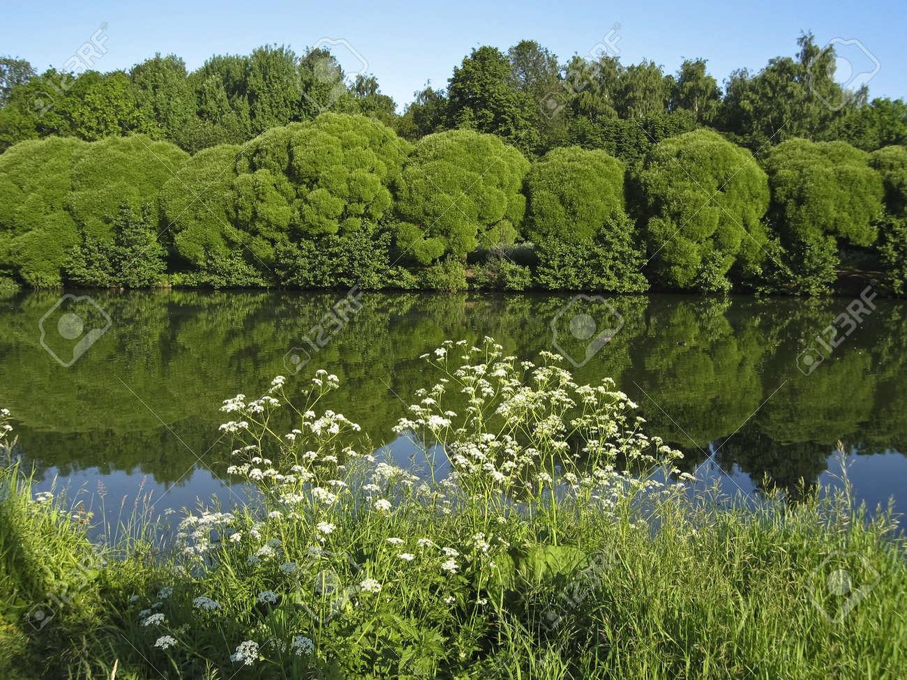 Sommerlandschaft Mit See Weiden Und Weisse Wilde Blumen Auf Banken