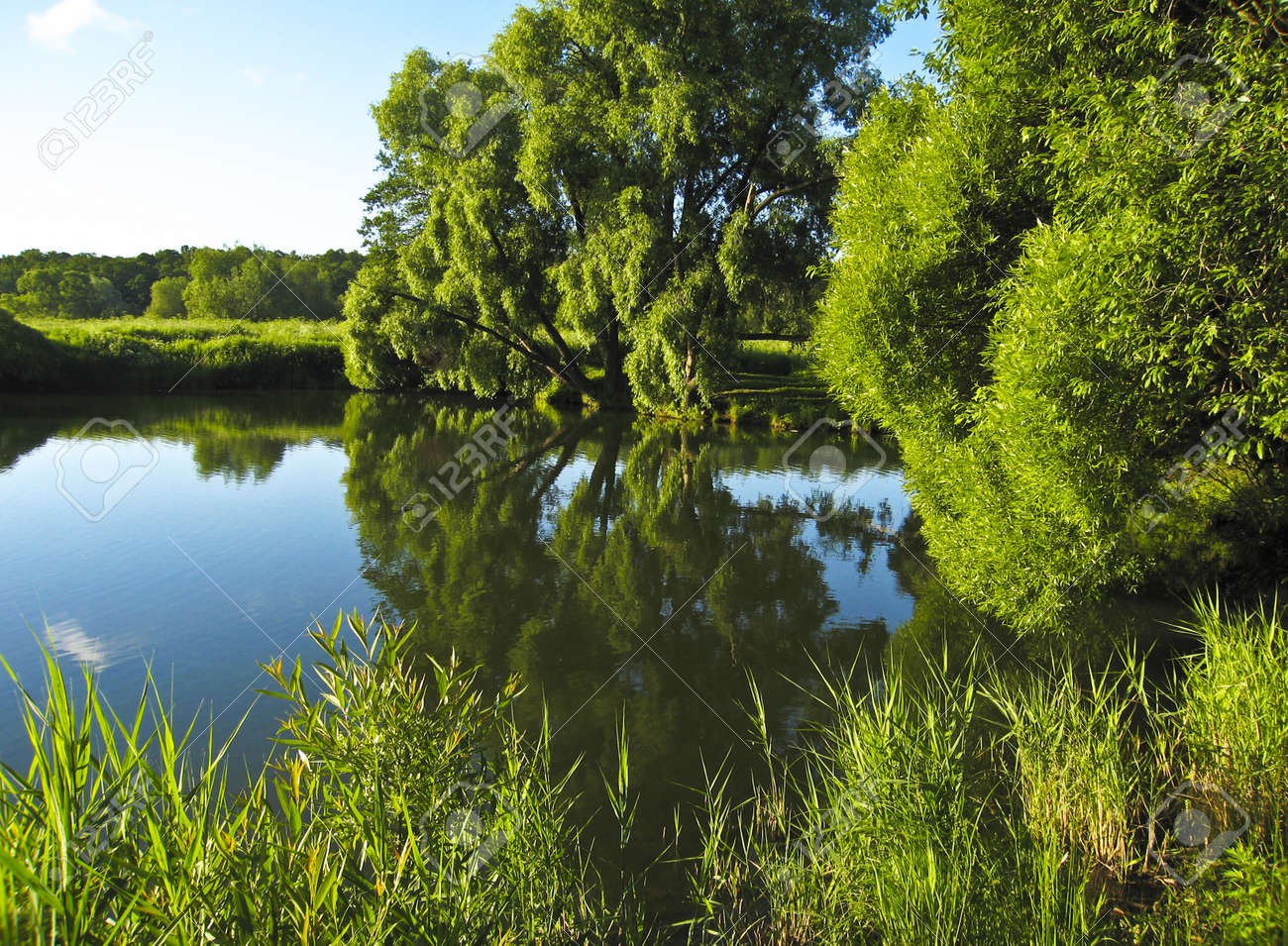 Summer landscape with water - lake with big willow trees and grass on banks, reflection of plants in water. Recorded in Izmaylovskiy park in Moscow. Stock Photo - 14034054