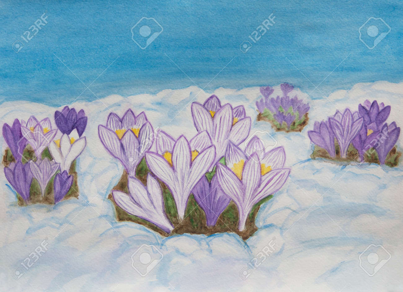 Crocuses first spring flowers in snow illustration painting stock crocuses first spring flowers in snow illustration painting watercolor horizontal stock illustration mightylinksfo