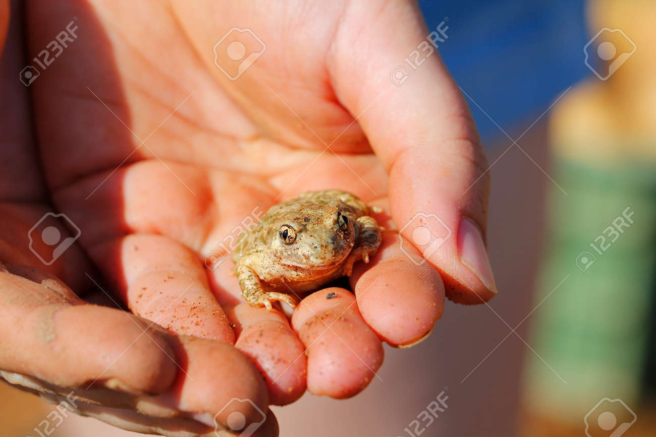 Mains humaines tenant une petite grenouille Banque d'images - 41971117