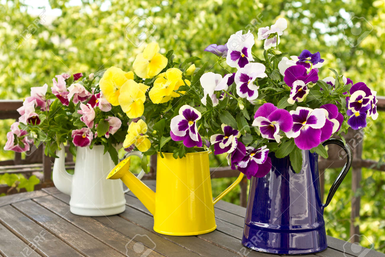 Three enamel jugs with pansy bouquets in different colors, colours - 25746537