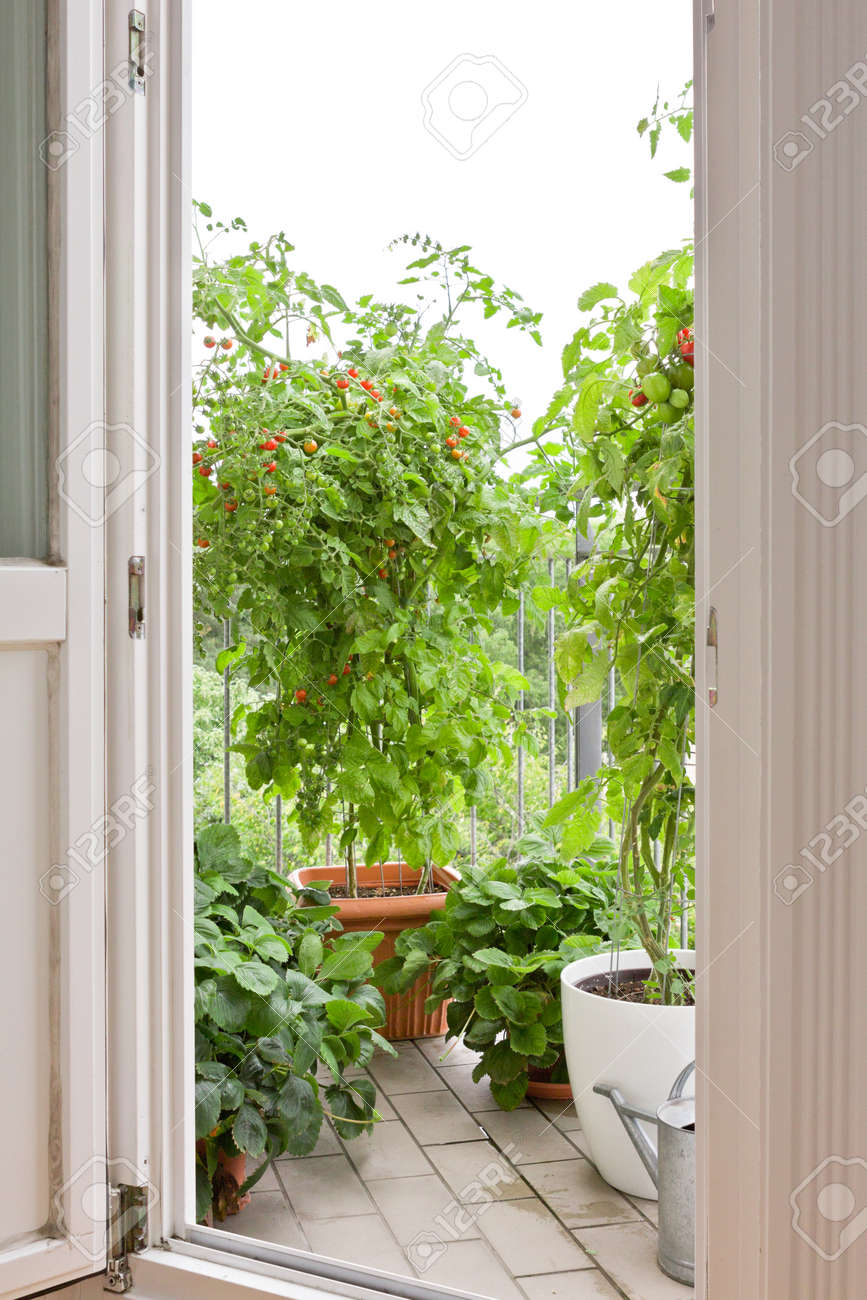 View through an open balcony door on tomato and strawberry plants in pots, copy space - 27700033