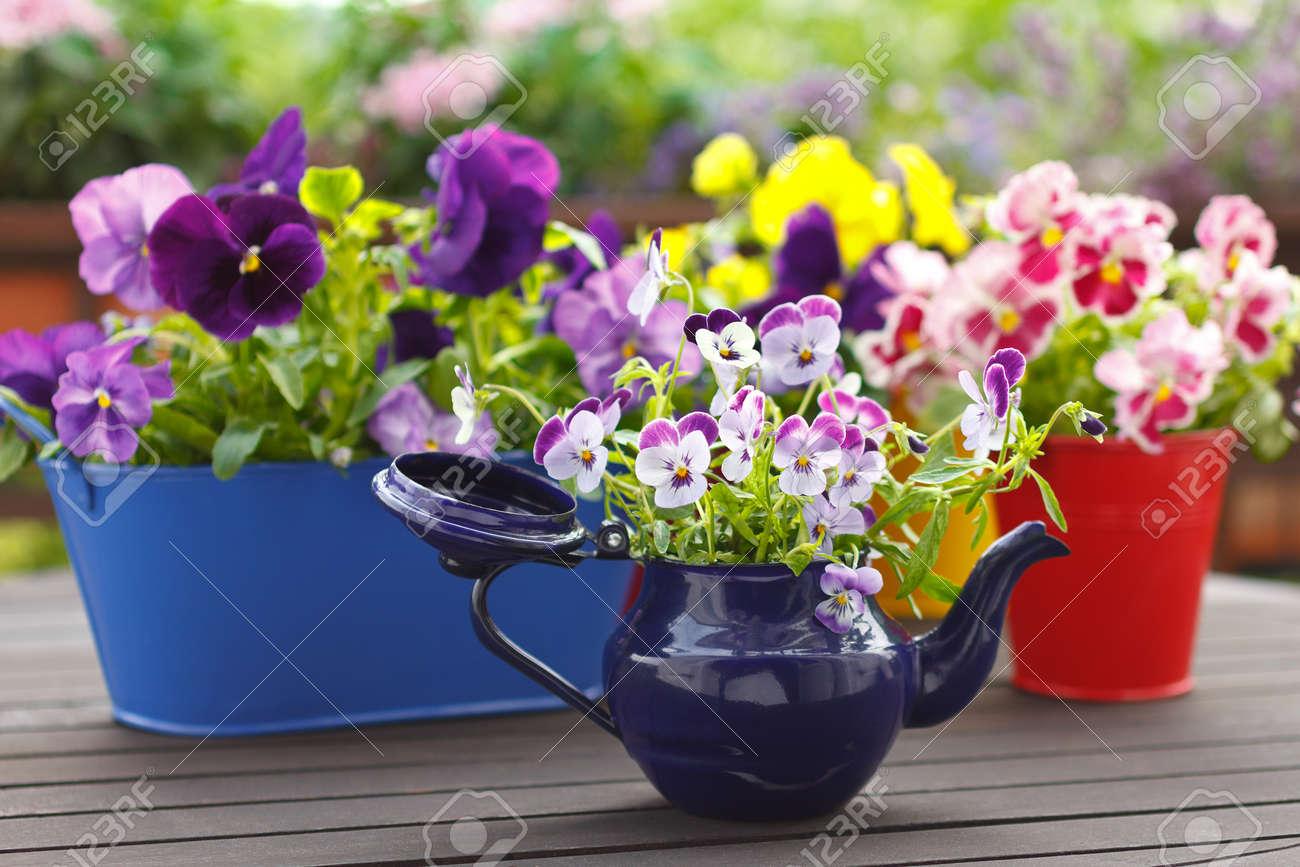 Lila Rot Und Gelb Stiefmutterchen Blumen In Bunten Topfen Auf Einem
