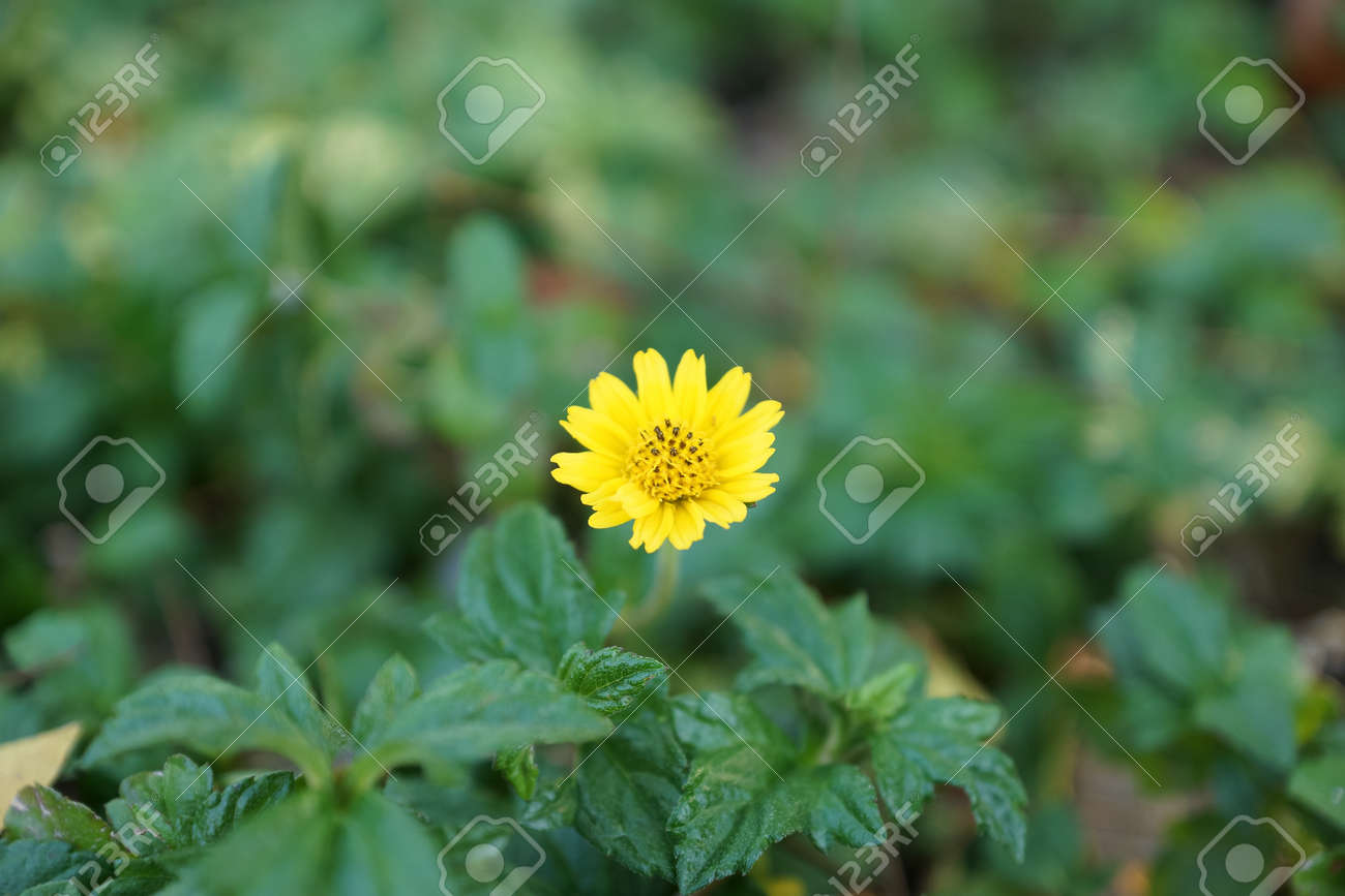 A Little Yellow Flower As Background With Copy Space Lizenzfreie