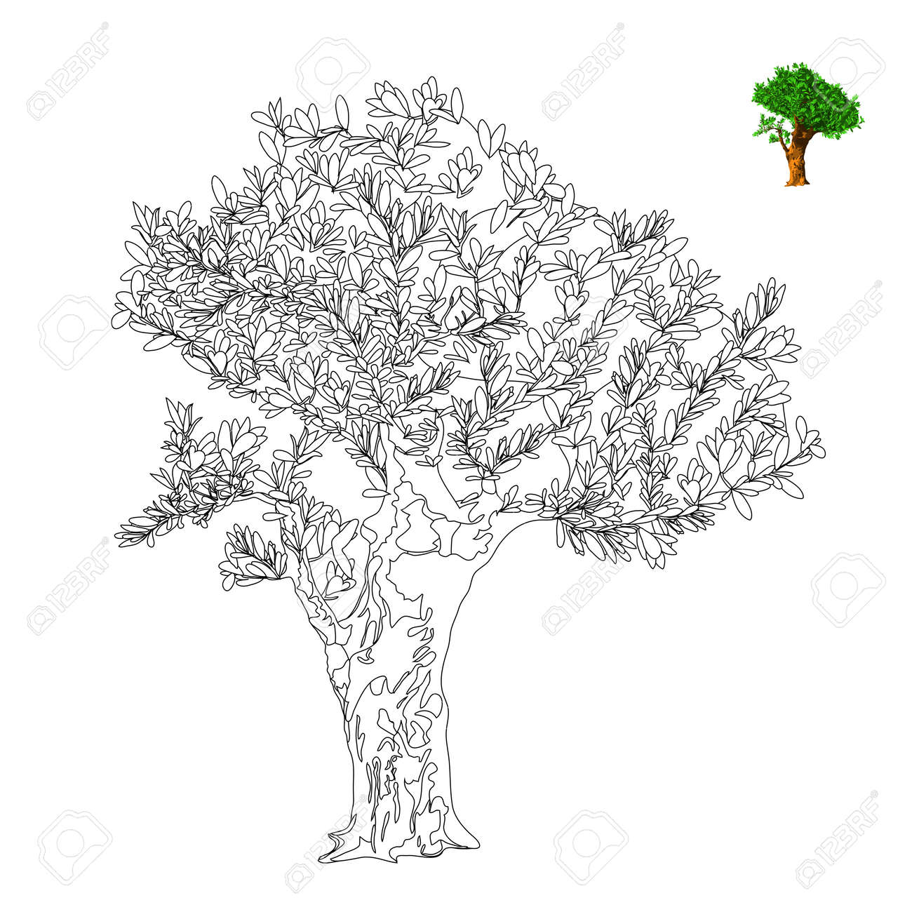 Olive Tree Vector Illustration Antistress Coloring Page Royalty