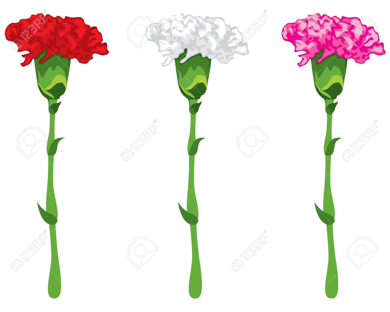 Flowers Carnations Pink Red And White Royalty Free Cliparts