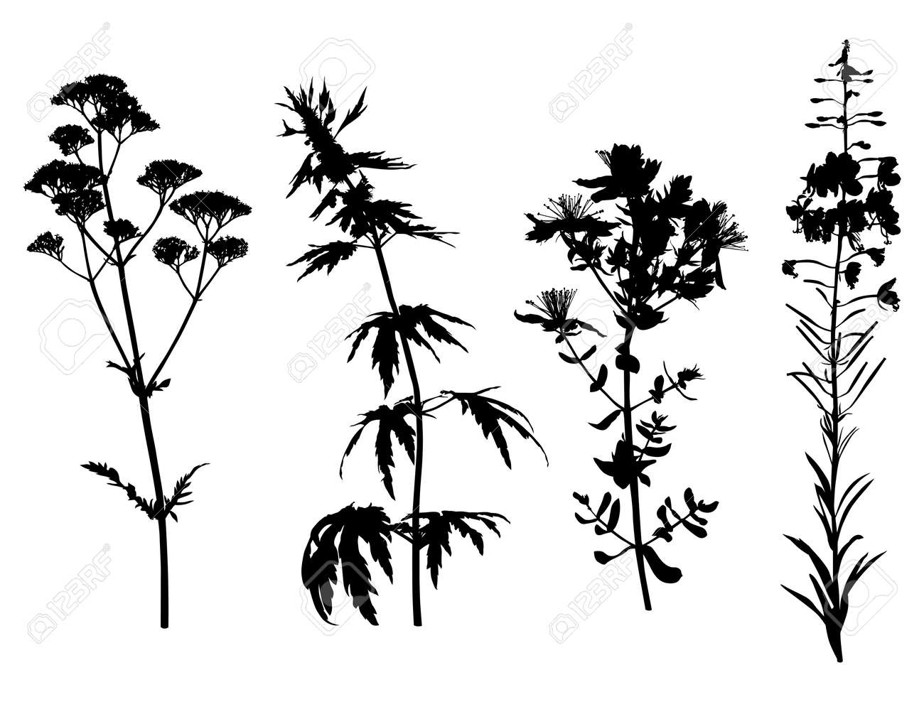 Line Drawing Flower Vector : Vector illustrations of medicinal herbals flower silhouette set
