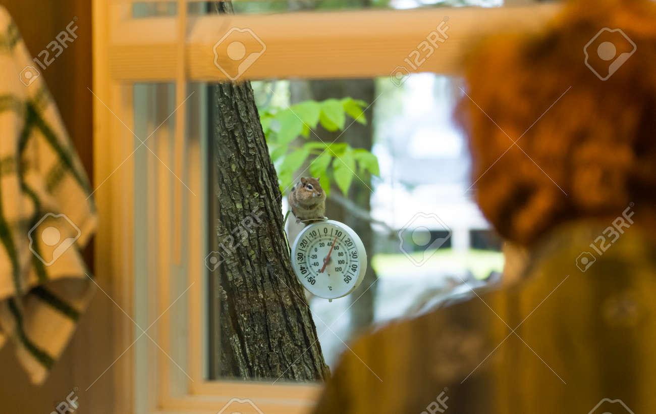 Ein CUUS Chipmunk Einer Frau, Die Aktivitäten An Der Senke Von Außen ...