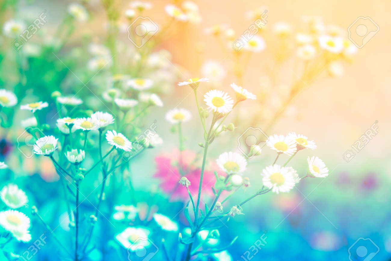 Beautiful Colorful Flower In Pastel Vitage And Retro Style With