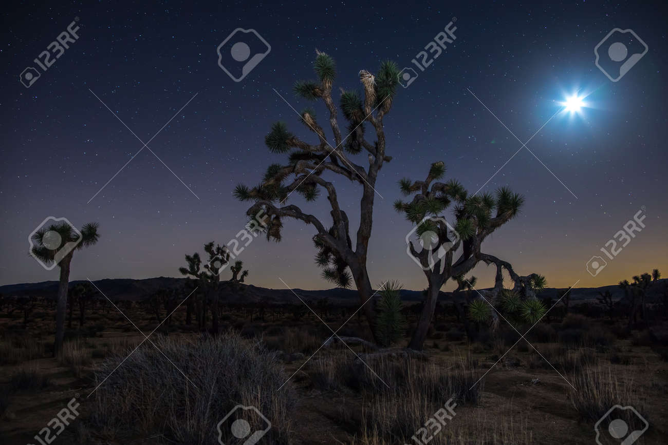 Joshua Trees At Night With Clean And Starry Sky Joshua Tree