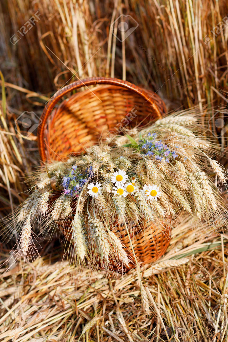 Ripe ears of wheat and wild flowers in basket against natural background in the field  Harvest concept Stock Photo - 14384146