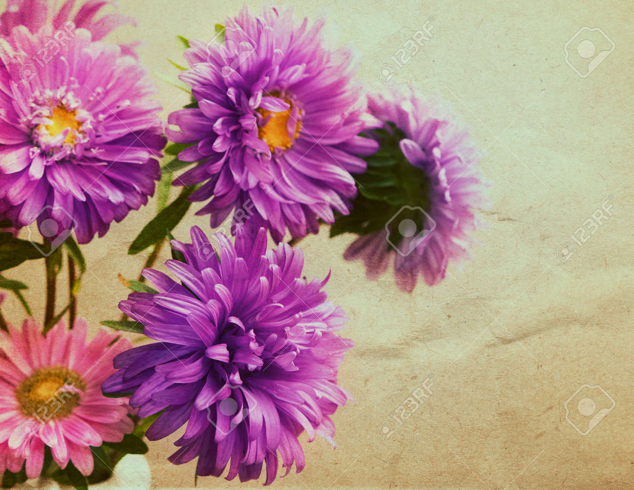 Aster Flowers Bouquet In Retro Style Stock Photo Picture And
