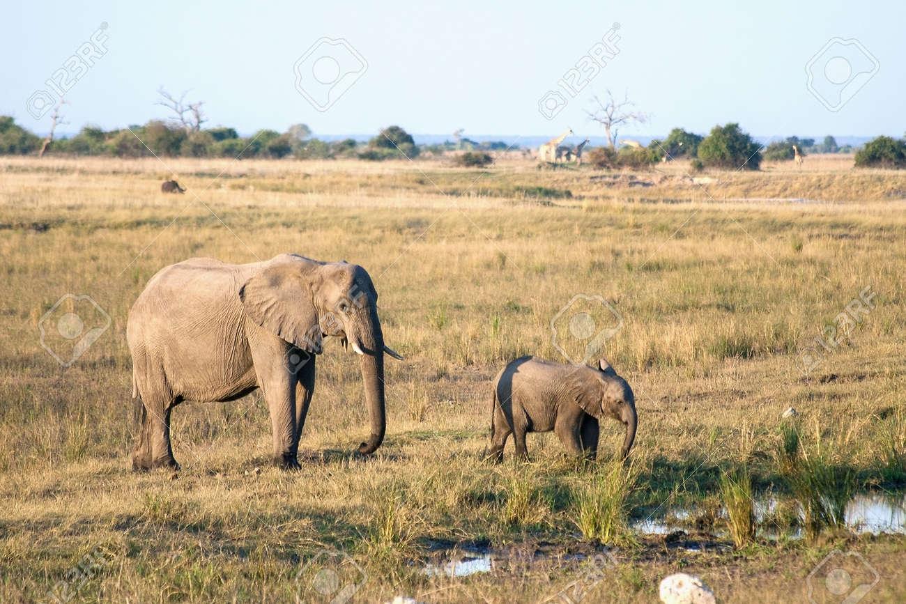 Elephant mother and baby in Botswana - 25889341