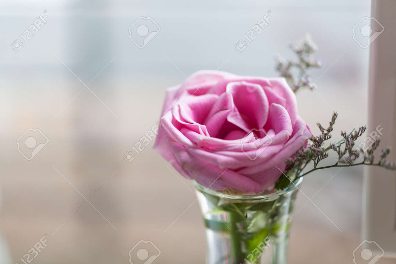 Close Up Tender Fresh Pink Roses In A Vase On A Glass Table Stock
