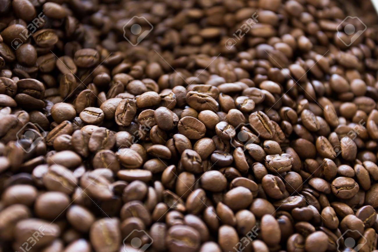kopi luwak coffee stock photo picture and royalty free image image
