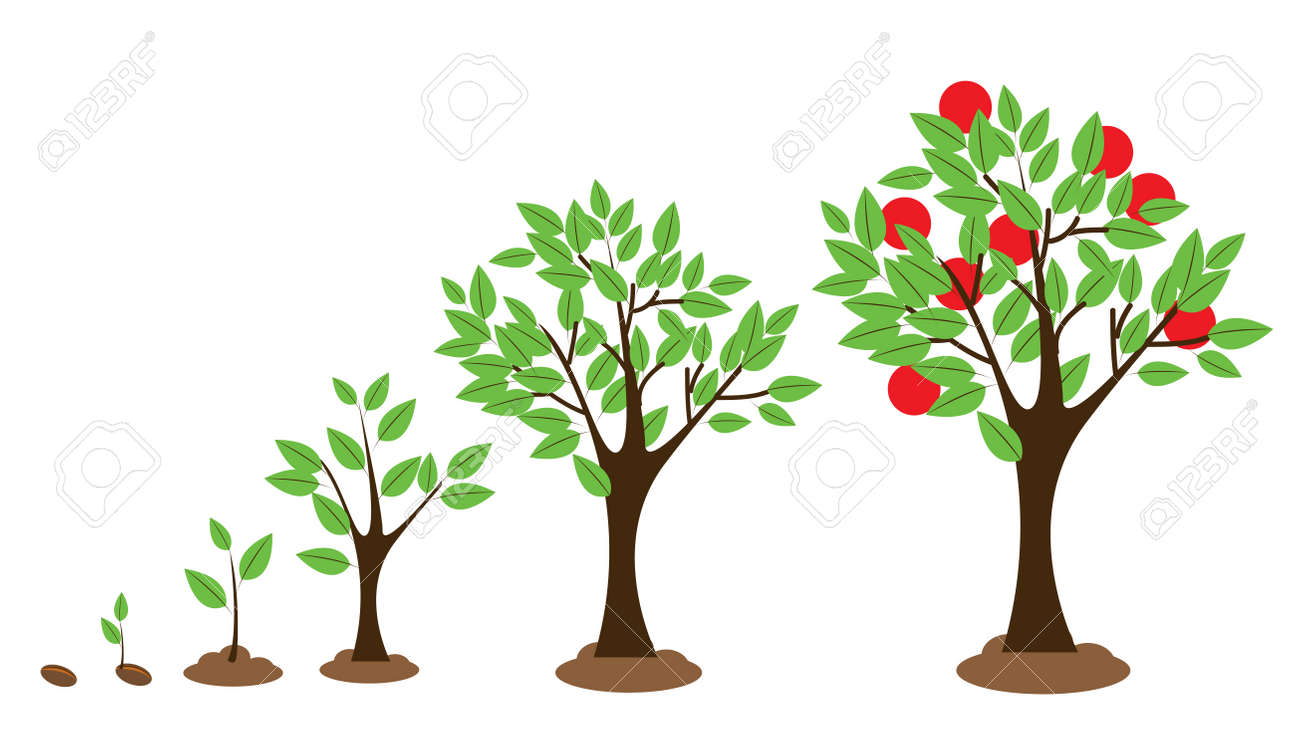 Vector illustration of tree growth diagram isolated on white - 38617310
