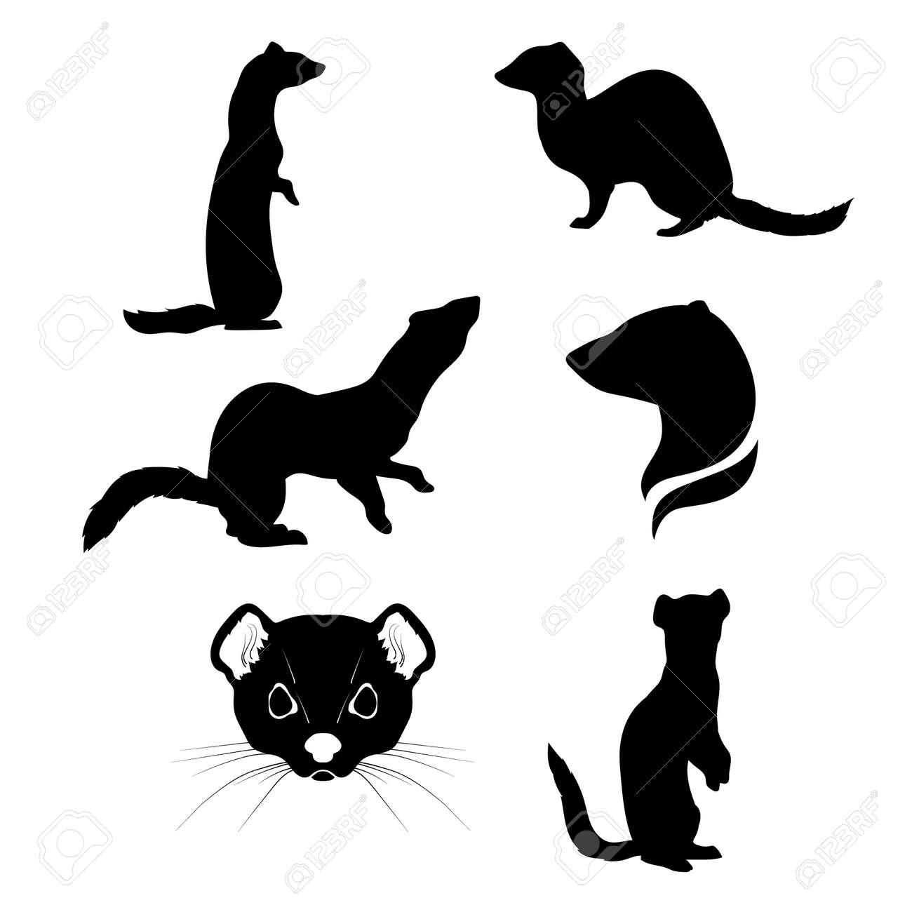 オコジョはシルエット ベクトルのセット。動物アイコンのコレクション